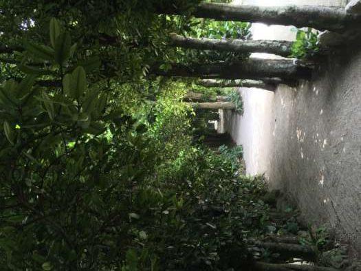 フクギ並木道